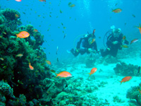 Scuba Diving in Fiji